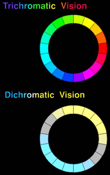 For A Severely Red Green Color Blind Person There Are Only Two Hues The Ones Normal Sees As Yellow And Blue Intermediate Colors